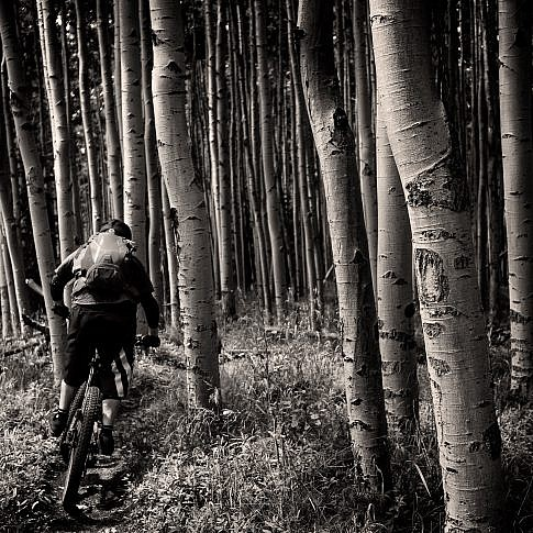 Joel descends into the abyss of aspens